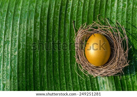 Golden egg  in a nest on a banana leaf with empty space for adding text: A golden egg opportunity concept of wealth and chance to be rich - stock photo