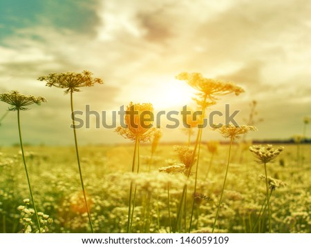 Golden evening on the summer meadow, natural landscape - stock photo