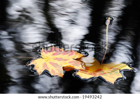 Golden fall leaves floating in water - stock photo