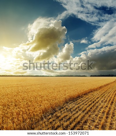 golden field and sunset in dramatic sky