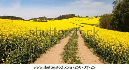 golden field of flowering rapeseed with rural road and beautiful cloudy sky - brassica napus - plant for green energy and oil industry - stock photo