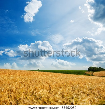 golden field under cloudy sky - stock photo
