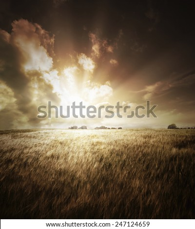 Golden field with the sun setting over the horizon - stock photo