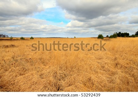 Golden field with trees and cloudy sky - stock photo