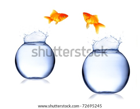 GOlden fish Carassius auratus jumping from aquarium - stock photo
