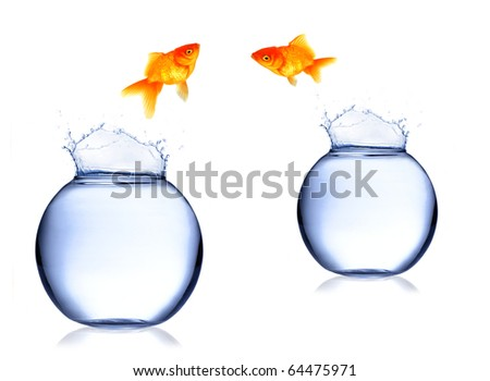Golden fish jumping from aquarium - stock photo