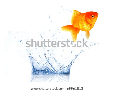 golden fish jumping from water - stock photo