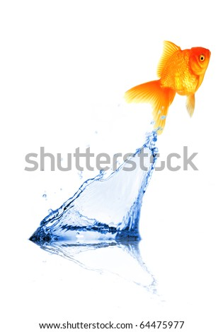 Golden fish jumping out of water - stock photo