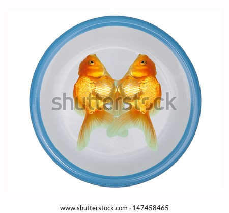 Golden fish on plate isolated on white background