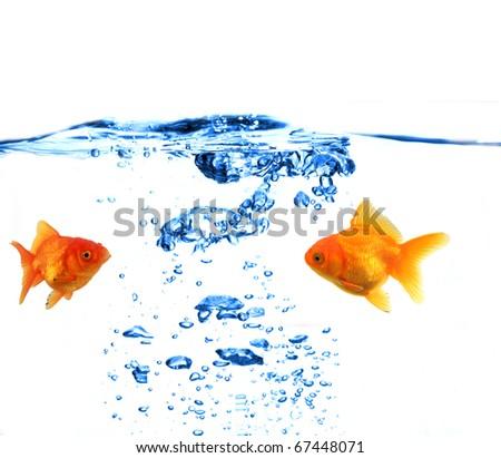 GOlden fish underwater - stock photo