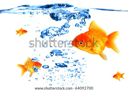 GOlden fish with bubbles - stock photo