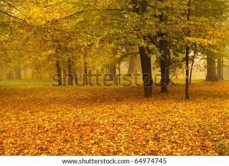 golden foliage in autumn - stock photo