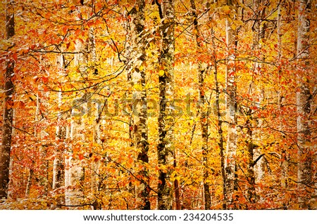 Golden forest in autumn  - stock photo