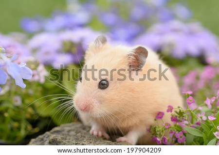 Golden Hamster in a flower garden - stock photo