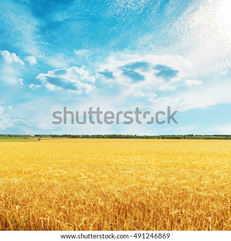 golden harvest field with wheat and clouds over it