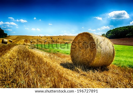 Golden hay bales at agricultural field - stock photo