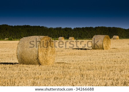 Golden Hay Bales in the countrysid