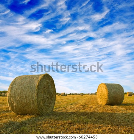 Golden Hay Bales in the countryside. - stock photo