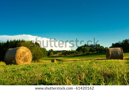 Golden hay bales in the countryside under the blue sky. - stock photo