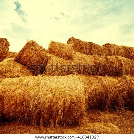 Golden hay bales on the field at sunset. Agriculture background and concept. Nature scenics. Square composotion. - stock photo