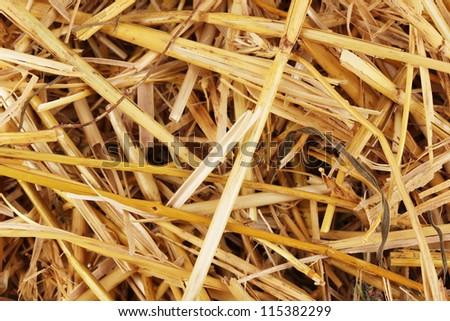 Golden hay close-up - stock photo