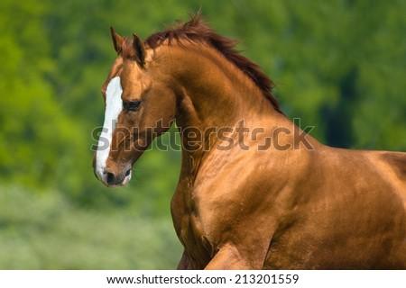 Golden horse portrait in motion - stock photo