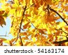 Golden Leaves - stock photo