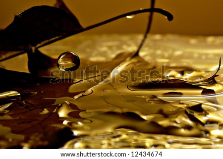 Golden leaves after a deluge - stock photo