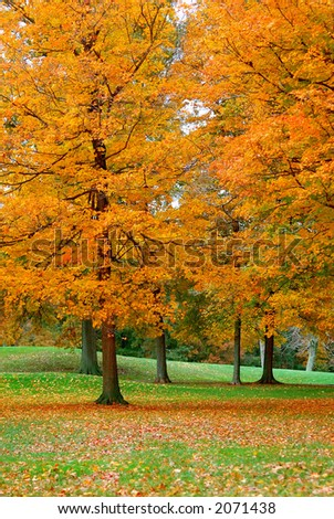 Golden Leaves - Golden leaves cover the greens of a golf course in the autumn.