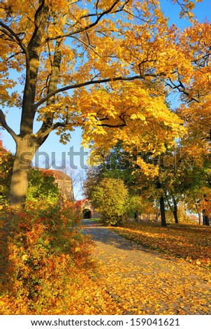 Golden leaves on forest park tree with footpath