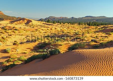 Golden light of setting sun over the desert dunes at Coral Pink Sand Dunes State Park near Kanab, Utah. - stock photo