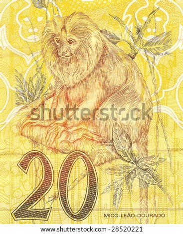 golden lion tamarin (Leontopithecus rosalia) in 20 Real brazilian money bill