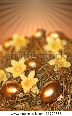 Golden Nest Eggs and yellow daffodils - stock photo