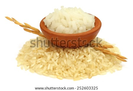 Golden paddy seeds with rice raw and cooked over white background - stock photo