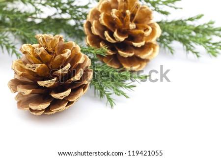 Golden Pine Cones - stock photo
