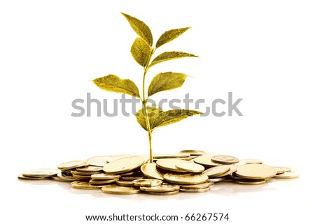 Golden plant grow up in golden coins isolated on white