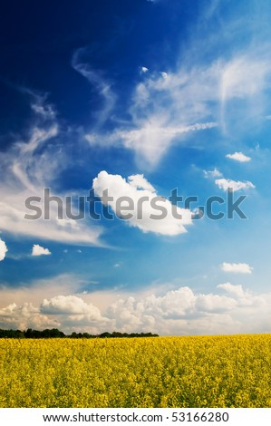 Golden rapeseed field and white clouds by springtime. - stock photo