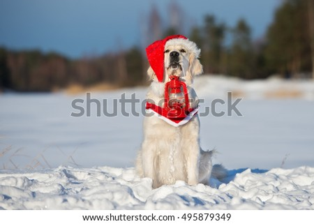 golden retriever dog in a santa hat outdoors in winter