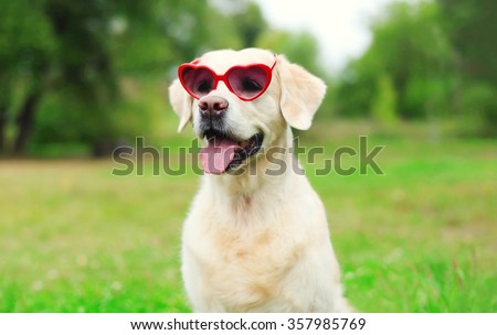 Golden Retriever dog in sunglasses on grass in summer day - stock photo