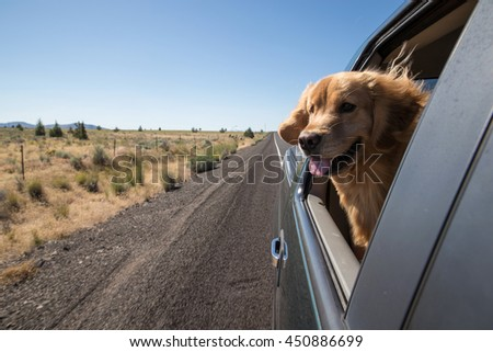 Golden Retriever Dog on a road trip