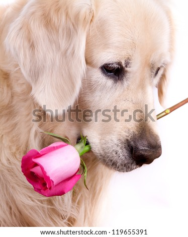 Golden retriever dog with a pink rose