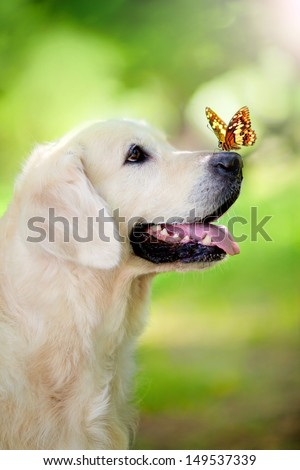 Golden retriever dog with butterfly - stock photo