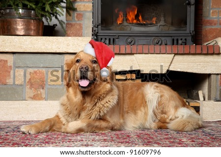 Golden retriever in Santa xmas cap lies near fireplace - stock photo