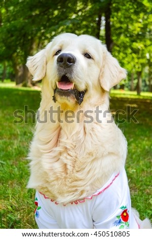 Golden Retriever in Ukrainian embroidered shirt  on a walk in the park