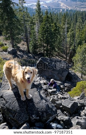 Golden Retriever on top of Boca Hill in Tahoe national forest in the California Sierra Nevada mountains