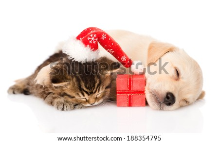 golden retriever puppy dog and british cat with santa hat and gift sleeping together. isolated on white background - stock photo