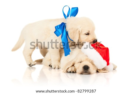golden retriever puppy in a  Santa Claus hat - stock photo