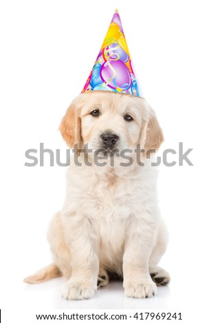 Golden retriever puppy in birthday hat looking at camera. isolated on white background - stock photo