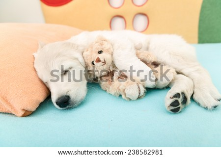golden retriever puppy sleeping with toy on the bed