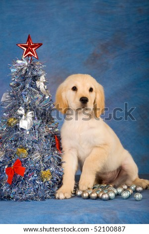 Golden Retriever puppy with Christmas tree on blue background - stock photo